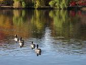 Fall Foliage and Pond — Stock Photo