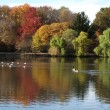 Stock Photo: Fall Foliage and Pond