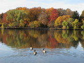 秋の紅葉と池 — ストック写真