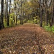 Fall Foliage and Path — Stock Photo