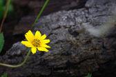 Malý žlutý květ — Stock fotografie