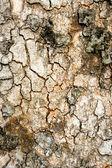 Tree Texture — Stock Photo