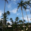 Tropical Resort — Photo #2872574