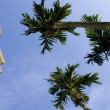 Stock Photo: Palm tree and residential building