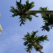 Stockfoto: Palm tree and residential building