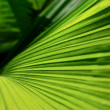 Foto Stock: Palm leaves