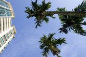 спрячьте в руке дерево и жилое здание — Стоковое фото
