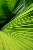 Palm leaves — Stock fotografie