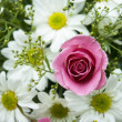 Pink Roses and white daisy — Stock fotografie