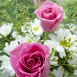 Stock Photo: Pink Roses and white daisy