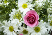 Pink Roses and white daisy — Stock Photo