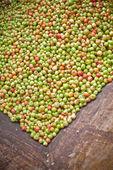 Kolekcja ogromnej ilości jabłek — Zdjęcie stockowe