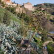 Stock Photo: Vegetation of Toledo