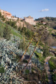 Vegetation of Toledo — Stock Photo
