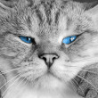 Blue eyes — Foto Stock