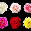 Stock Photo: Various roses