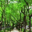 Sidewalk and tree — 图库照片