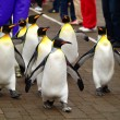 Stock Photo: King penguin