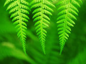 Three green leaves — Foto Stock