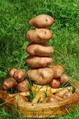 Still life of potatoes — Stock Photo