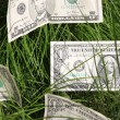 Harvest dollar — Stock Photo