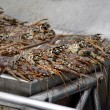 Cooking Lobsters — Stock Photo