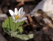 White Spring Flower — Stock Photo