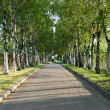 Stock Photo: Pretty birch tree alley on a summer day