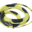 Stock Photo: Rubber Snake