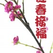 Greetings with Plum Blossom — Stock Photo