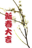 Greetings and Plum Blossom — Stock Photo