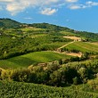 Hill with vineyards. — Stock Photo