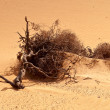 Dry root on the desert. — Stock Photo