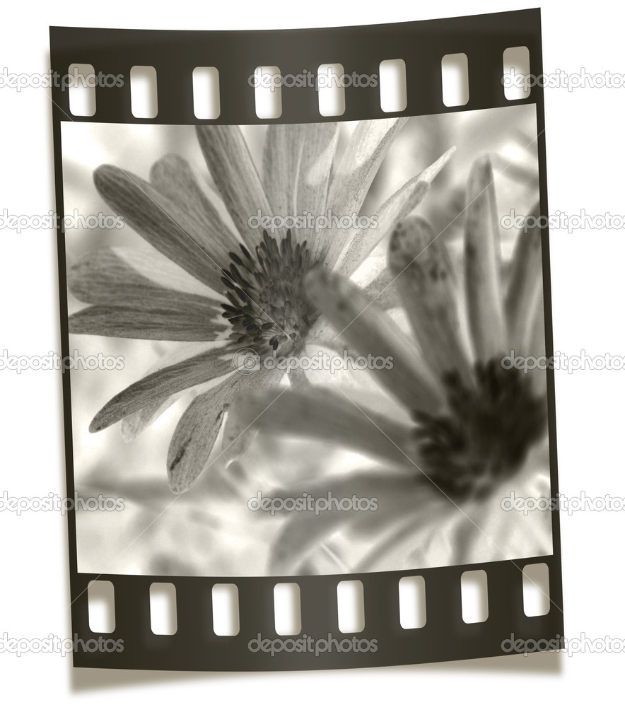Filmstrip Negative Illustration - Flower Macro  Stock Photo #2887532