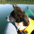 Canoeing with Dog - Stock Photo