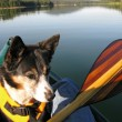 Canoeing with Dog — Stock Photo