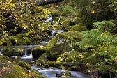 Ruisseau automne — Photo