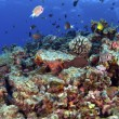 South Pacific Reef - Stockfoto