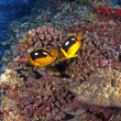 Coral Reef — Stock Photo #3443042