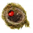 Red heart in nest — Stock Photo
