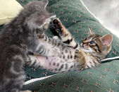 Kittens playing — Stock Photo