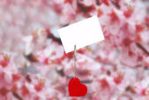Heart holder with white paper over pink — Stockfoto
