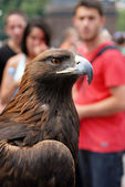 Brown Eagle on street — Stock Photo