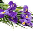 Irises — Stock Photo