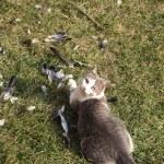 Cat hunter — Stock Photo #2782001