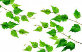 Rama verde — Stockfoto