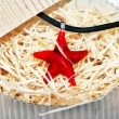 Red starfish necklace — Stock Photo