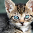 Baby cat portrait - Stock Photo