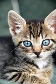 Baby kat portret — Stockfoto