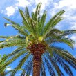 Palm over blue sky — Stock Photo